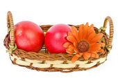 Colored easter eggs in a basket isolated — Stock Photo