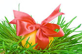 Easter eggs in the green nest isolated on white background — Stock Photo