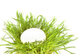 Easter eggs in a grass nest on white background — Stock Photo