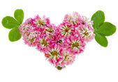 Pink clover flowers in heart shape, isolated on white — Stock Photo