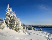 Winter mountain landscape with Christmas frozen trees — Stock Photo