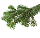 Christmas green branch on white — Stock Photo
