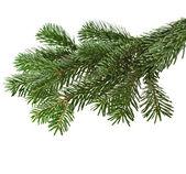 Christmas green branch on white — Stock Photo