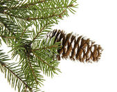Fir tree branch isolated on white — Stock Photo