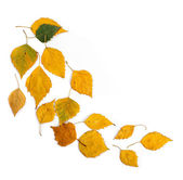 Autumn leaves falling isolated on white — Stock Photo