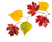 Autumn leave maple isolated on white background — Stock Photo
