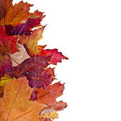 Autumn colored leafs on white — Stock Photo