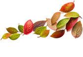 Autumn leaves isolated on white — Stock Photo