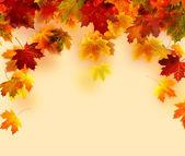 Autumn leaves background — Стоковое фото