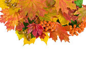 Colorful autumn leaves, card on white — Stock Photo