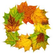 白で隔離される秋のフレーム — ストック写真