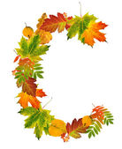 Letter C made of autumn leaves — Stock Photo