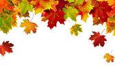 Armação de borda de folhas de outono coloridas isolado no branco — Foto Stock