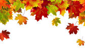 Border frame of colorful autumn leaves isolated on white — 图库照片