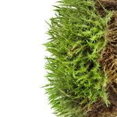 Green moss isolated on white — Photo