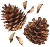 Cones collection isolated on white — Stock Photo