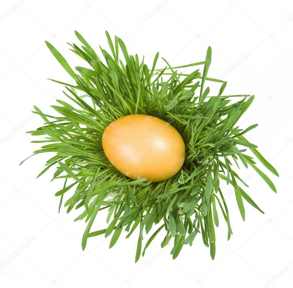 Easter egg in the middle of a green nest on white background — Stock Photo #13837288
