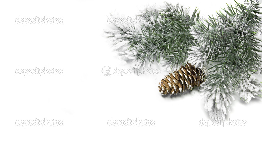 Evergreen fir tree branch on white for design  Stock Photo #13838134