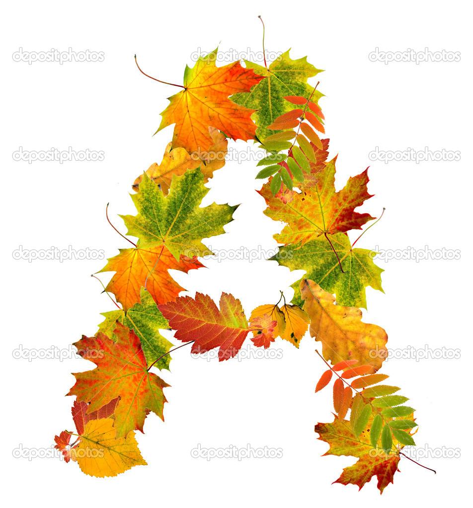 картинки из осенних листочков