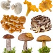 Collection of oyster, boletus mushroom in a green moss isolated on white background — Stock Photo #13993011