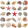 Seashell collection isolated on white background — Stock Photo #13998143