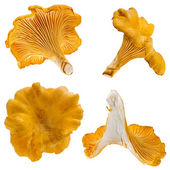 Mushrooms chanterelle isolated on white background — Stock Photo