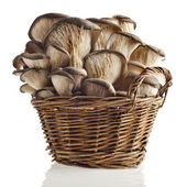 Oyster mushroom in basket on white background — Stock Photo