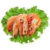 Fresh shrimp on a salad lettuce isolated on white — Stock Photo