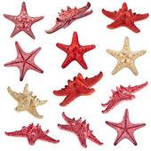 Starfish family — Stock Photo