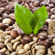 Stock Photo: Pile unroasted and brown coffee beans with leaves cofee tree, on white background