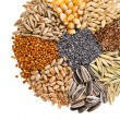 Round of Cereal Grains, Seeds, Rye, Wheat, Barley, Oat, Sunflower, Corn, Flax, Poppy, on white background — Stock Photo #14091516