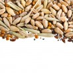 Постер, плакат: Cereal Grains and Seeds