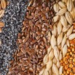 Cereal Grains and Seeds — Stock Photo #14091577