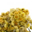 Immortelle (Helychrysum) isolated on white background - Stock Photo