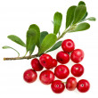 Bearberry (Arctostaphylos Officinalis) - Stock Photo