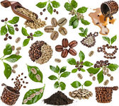 Collection of coffee grains beans with leaves of coffee tree isolated on white — Stock Photo