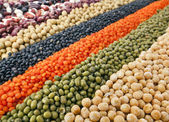 Striped rows of lentils, beans, peas, soybeans, legumes, backdrop — Stock Photo