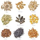 Coleta de grãos de cereais e sementes: centeio, trigo, cevada, aveia, girassol, milho, linhaça, papoula, milho close up isolado no branco — Foto Stock