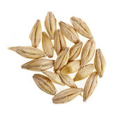 Barley grain seed closeup isolated on white — Stock Photo