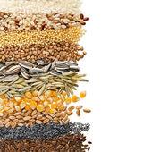 Sementes e grãos de cereais — Foto Stock