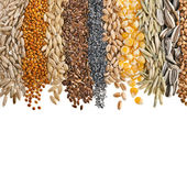 Obilná zrna a semena — Stock fotografie