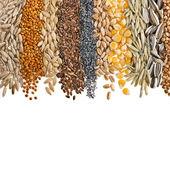 Ziarna zbóż i nasion — Zdjęcie stockowe