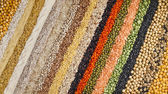 Colorful striped rows of dry lentils, soya beans, groats,peas, grain, buckwheat, soybeans, legumes, rice, backdrop — Photo