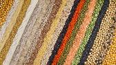 カラフルな縞模様行の乾燥レンズ豆、大豆、ひき割り穀物、エンドウ豆、穀物、そば、大豆、豆類、米、背景 — ストック写真