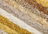 Striped rows of dry groats, couscous, bulgur, grain cereal, buckwheat, rice, backdrop — Stock Photo
