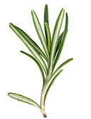 Rosemary on a white — Stock Photo