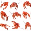 Collection of red boiled crawfish on white background — Stock Photo #14377239