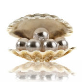 Sea shell with pearls — Stock Photo