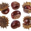 Chestnuts isolated on a white background - Stock Photo