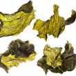 Dried seaweed kelp Isolated on white - Stock Photo